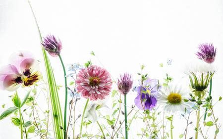 Flores de primavera Foto de archivo - 68754940