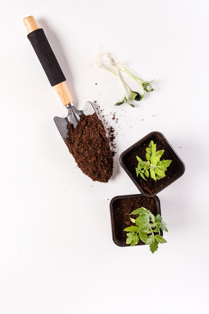 Young tomato seedling in a clay pot Stock Photo