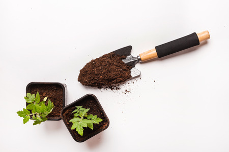 peat pot: Young tomato seedling in a clay pot Stock Photo
