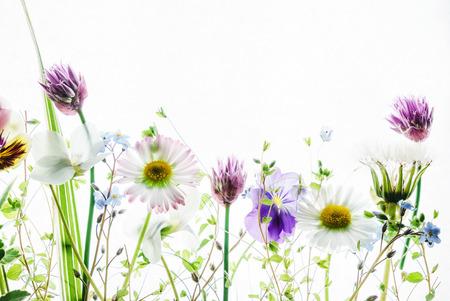 Flores de primavera Foto de archivo - 71676813