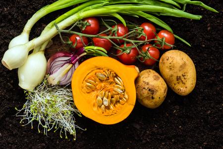 siembra: fresh organic vegetables