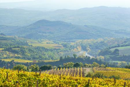 vineyard Stock fotó