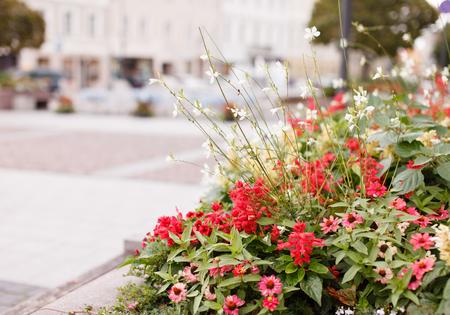 street flowers Reklamní fotografie
