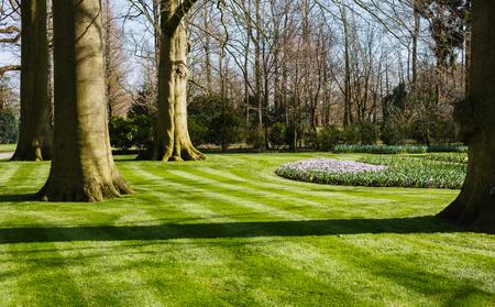 春の庭 写真素材