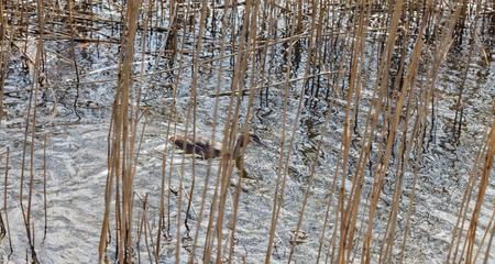 waterfowl bird