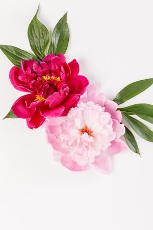 牡丹の花 写真素材