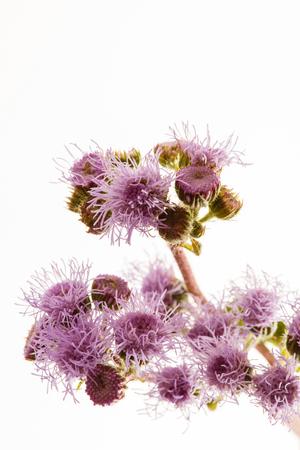 nice flower isolated Stock Photo