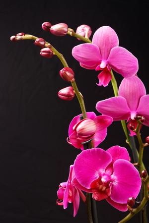 美しい蘭の花
