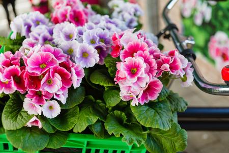 spring flowers Stok Fotoğraf - 80033171
