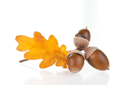 acorns with leaves Stock Photo