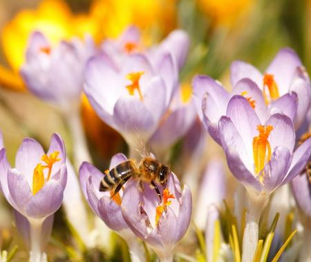 풍부한 봄 꽃