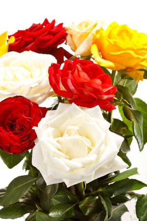 Bunch of beautiful roses Stock Photo