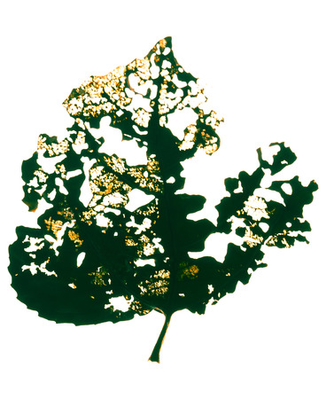 droog blad