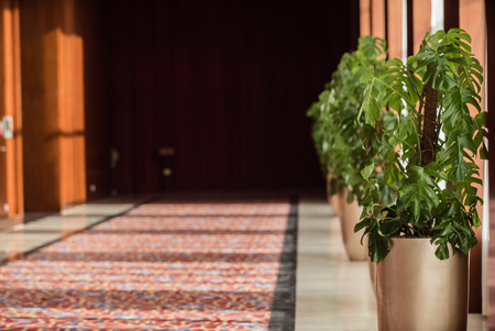 plant in the hall Imagens