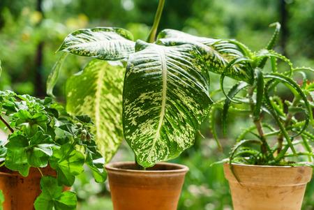 Kamerplanten in de pot