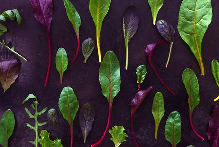 아기 샐러드 잎 스톡 콘텐츠