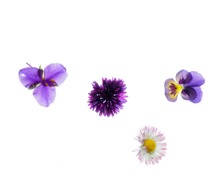 summer flowers isolated