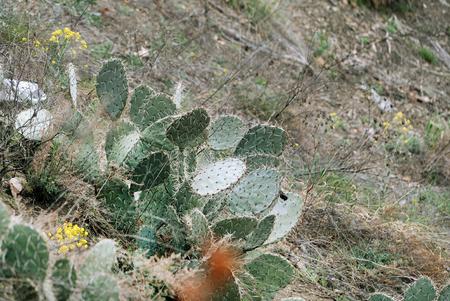 サボテン植物 写真素材