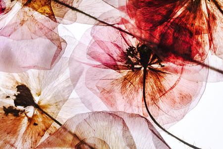 gedroogde bloemen