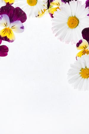 pansies flowers Stock Photo - 81518137