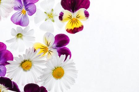 Fiori di viole del Archivio Fotografico - 81518082
