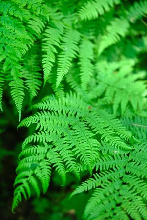 forest fern Stock fotó