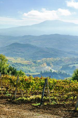vineyard Stok Fotoğraf