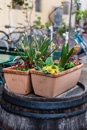 냄비에 꽃 스톡 콘텐츠
