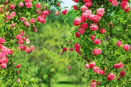 summer garden Banco de Imagens