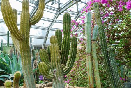 glasshouse: cactus in glasshouse