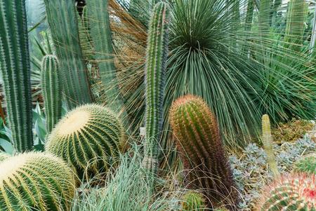 cactus in glasshouse