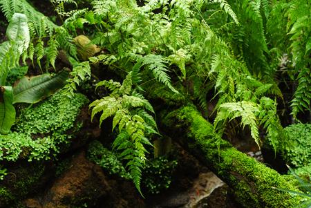 glasshouse: fern in glasshouse Stock Photo