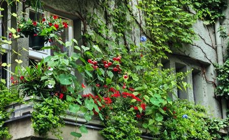 balcony with flowers Stock fotó