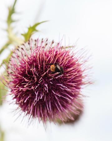 꽃에 꿀벌 스톡 콘텐츠 - 83006700