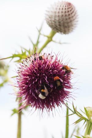 꽃에 꿀벌 스톡 콘텐츠