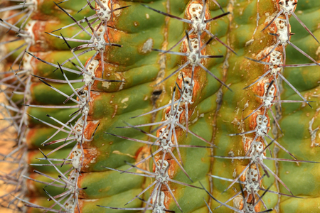 cactus texture Zdjęcie Seryjne