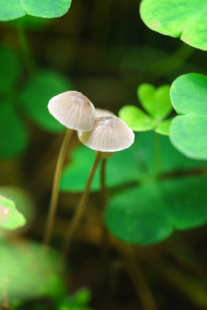 small mushrooms toadstools Stock Photo