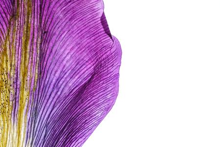 Iris petali closeup Archivio Fotografico - 83234665