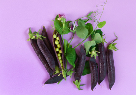 purple podded peas Stock Photo