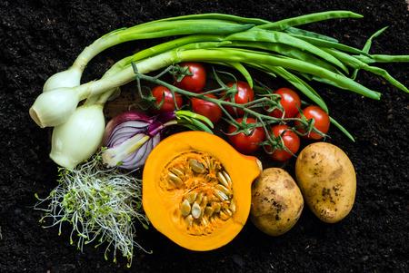 siembra: vegetales orgánicos frescos Foto de archivo