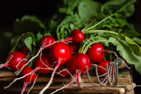 resh radish