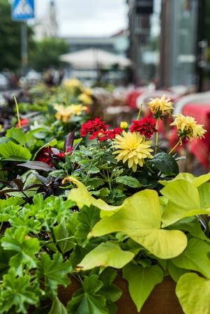 Buiten bloemen Stockfoto - 83754832