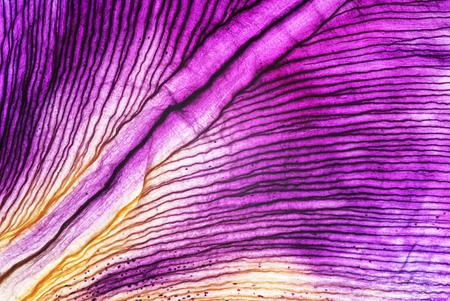 iris petals closeup Reklamní fotografie