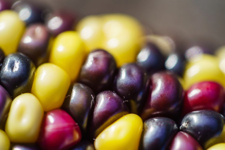 rainbow corn Banco de Imagens