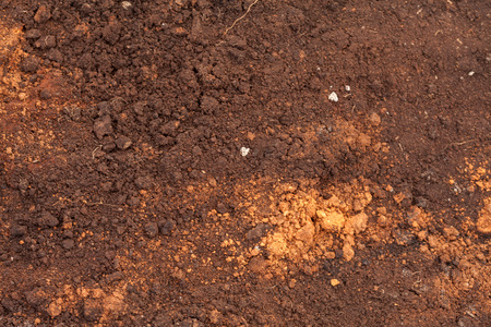 peat soil as a background Stock Photo