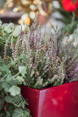 verwarm de plant in de pot