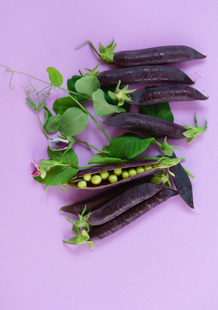 purple podded peas 版權商用圖片