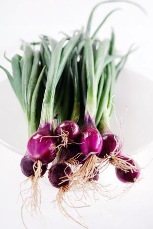 bulbos de cebolla Foto de archivo