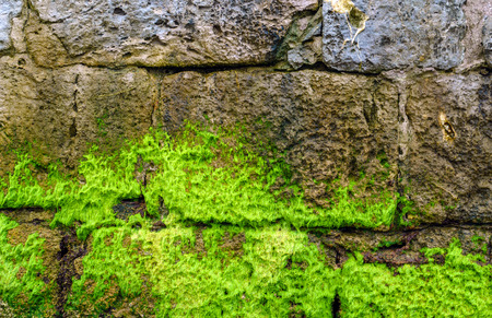 wall with seaweed