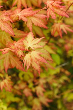 Herbstblätter Standard-Bild - 85281871
